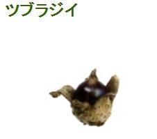 椎の実.jpg