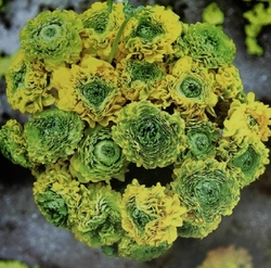 花の写真236198.jpg